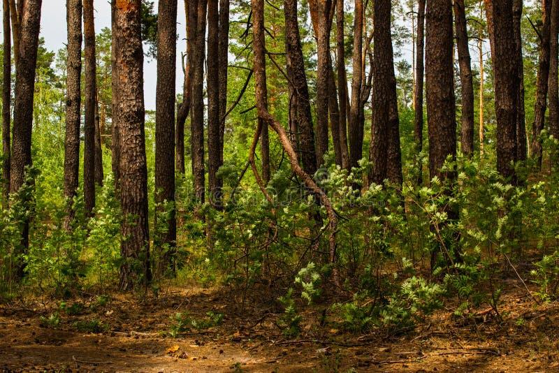 Jaskrawy - zieleń liście ozdabiają lato las robi mię fantastycznemu fotografia royalty free