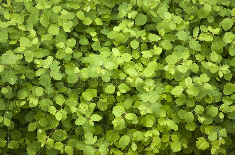 jaskrawy - zieleni liść zdjęcie royalty free