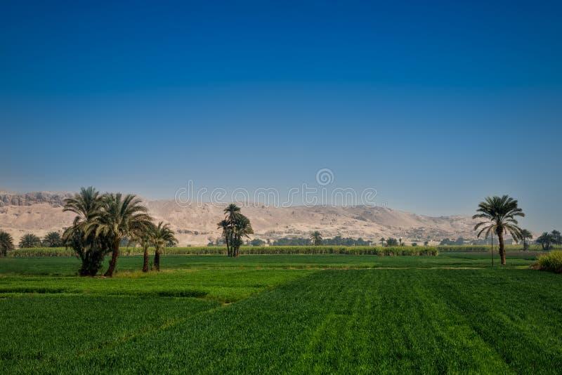 Jaskrawy - zieleni pola kontrastuj? z niebieskim niebem i suchymi kolor ? zdjęcia stock