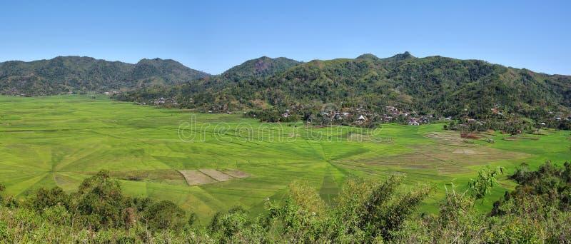 Jaskrawy - zieleni ryżowi pająk sieci pola zdjęcie stock