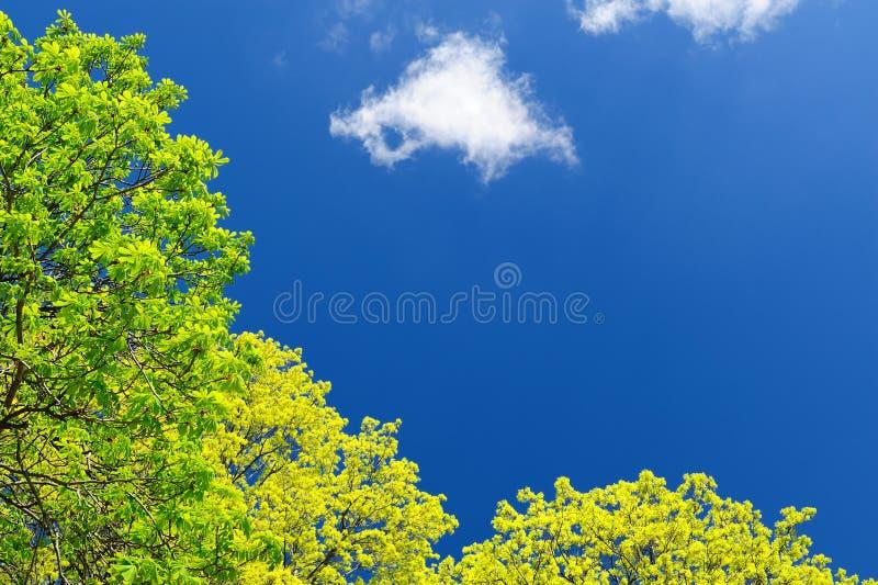 Download Jaskrawy - Zielony Drzewo Opuszcza W Niebieskim Niebie Z Obłocznym Copyspace Zdjęcie Stock - Obraz złożonej z bujny, szczęśliwy: 53783414