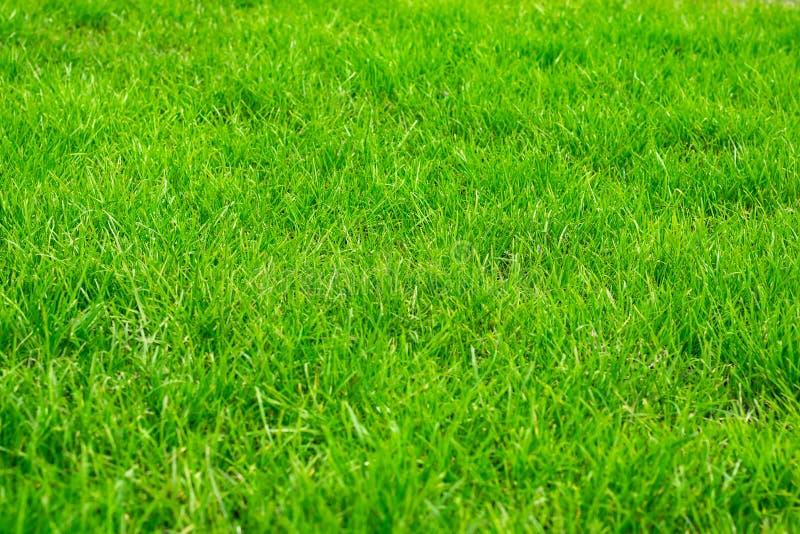 Jaskrawy - zielony gazon, trawa, gazon dla gier obraz stock