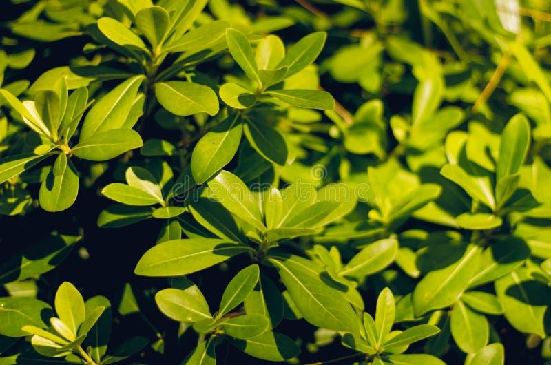 Jaskrawy - zielony ulistnienie i trawa w górę Roślinność w Turcja Tekstura zielenie obrazy royalty free