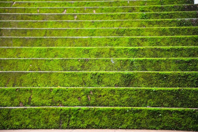Jaskrawy - zielonych mechatych kamiennych schodowych kroków ciężki tło w jesień sezonie Architektoniczny dekoracja projekt, rośli zdjęcie royalty free