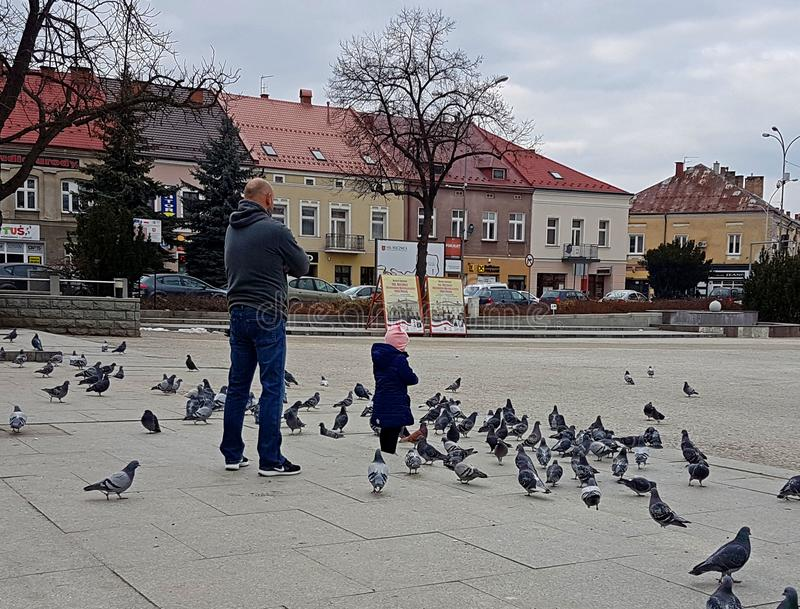 Jaslo/Polonia-marcha 27,2018: Una niña, ocupándose a su padre, juega con las palomas de la ciudad en el cuadrado central Padre y foto de archivo libre de regalías
