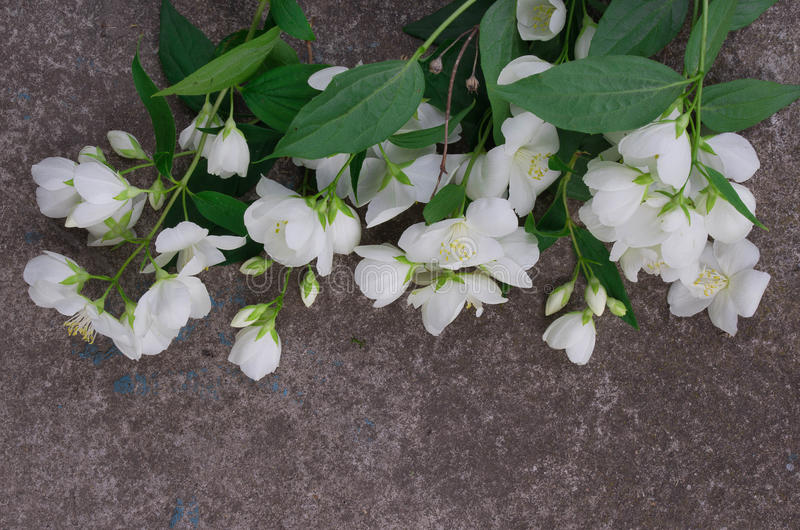 Jasmijnbloemen op grijze steen royalty-vrije stock fotografie