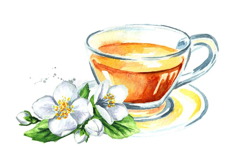 jasmijnthee en jasmijnbloemen Waterverfhand getrokken die illustratie, op witte achtergrond wordt geïsoleerd stock illustratie