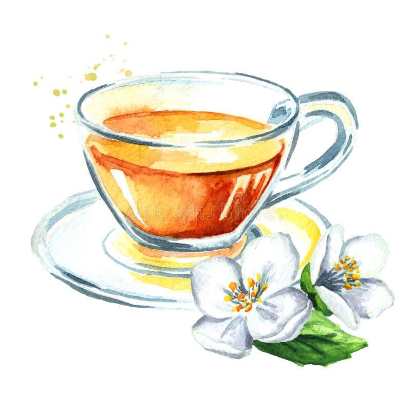 jasmijnthee en jasmijnbloemen Waterverfhand getrokken die illustratie, op witte achtergrond wordt geïsoleerd vector illustratie
