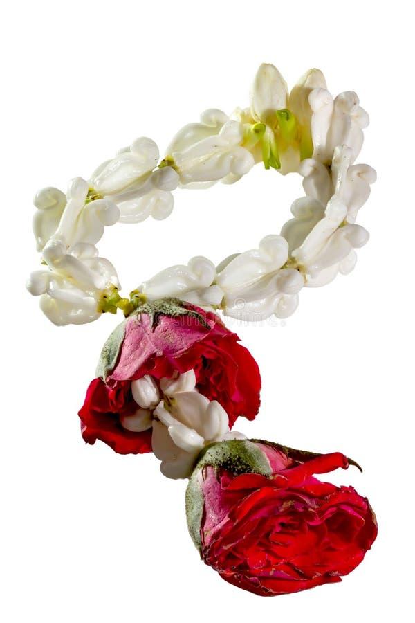Jasmim da festão e flor cor-de-rosa isolados no fundo branco imagem de stock