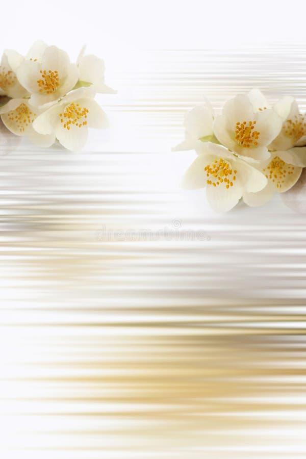 Jasmin. Flowers creating soft background stock images