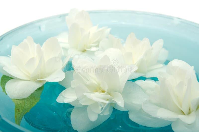 Jasmin-Blumen, die auf Wasser schwimmen stockfotografie