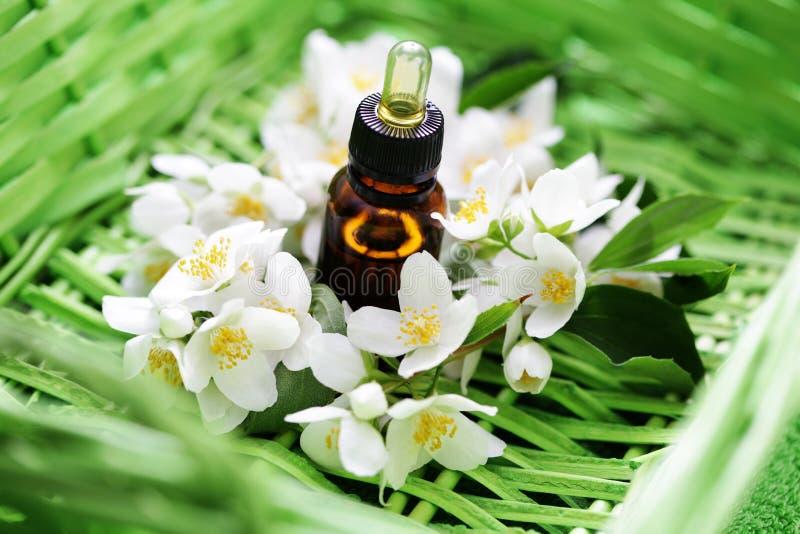Jasmin essential oil. With fresh jasmine flowers - beauty treatment royalty free stock photo