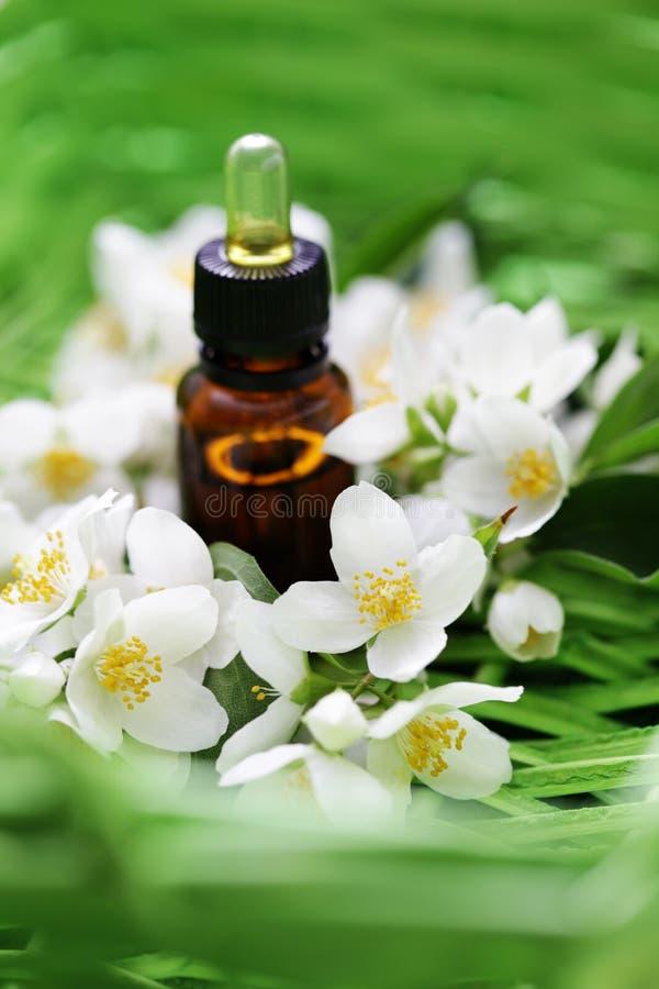 Jasmin essential oil. With fresh jasmine flowers - beauty treatment stock photos