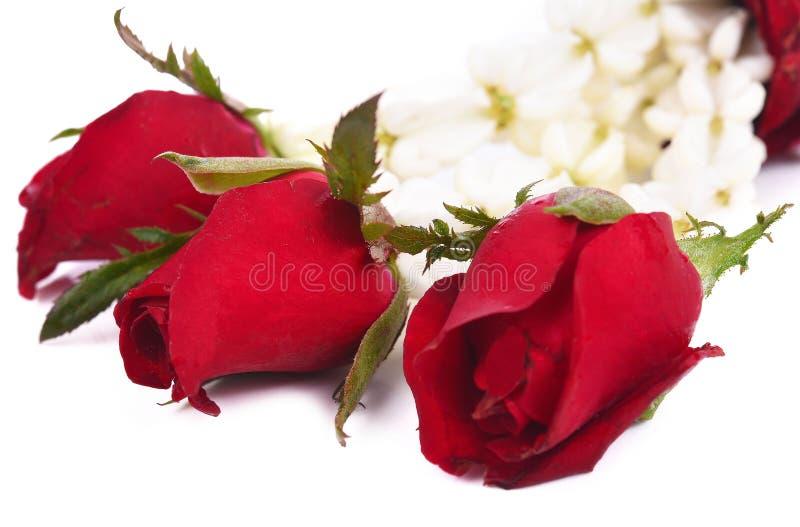 Jasmin et guirlande rose d'isolement sur le fond blanc photographie stock