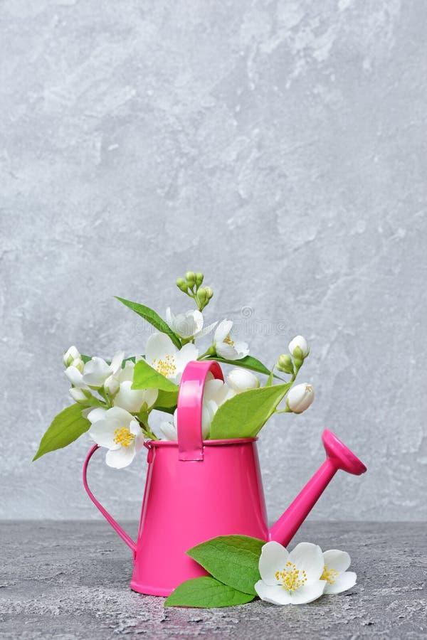 Jasmin fleurissant dans une boîte d'arrosage décorative de jardin image libre de droits