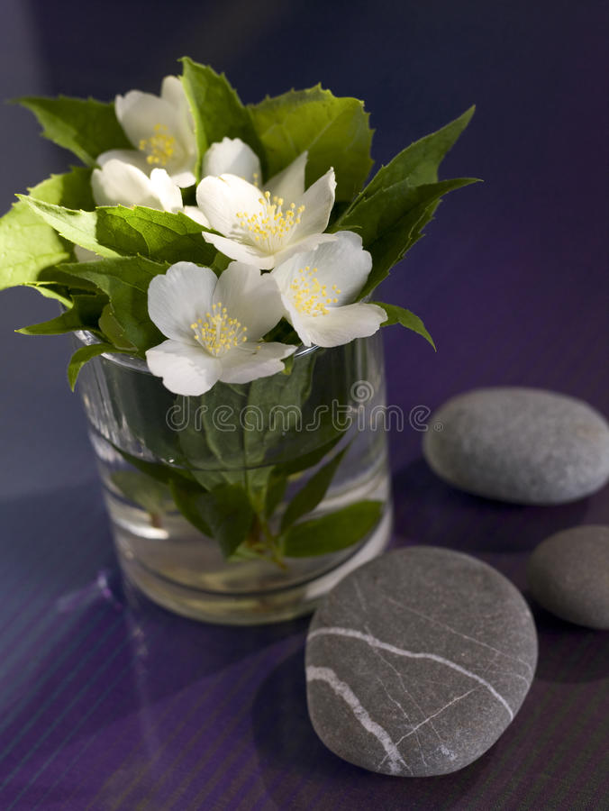 Jasmin flowers. In the glass over blue background royalty free stock image