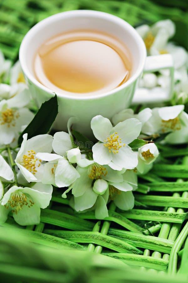 Jasmin tea. Cup of jasmin tea with fresh flowers - tea time stock images