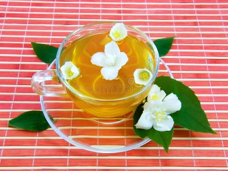 Jasmin tea. Transparent cup with tea and flower of jasmin stock photo