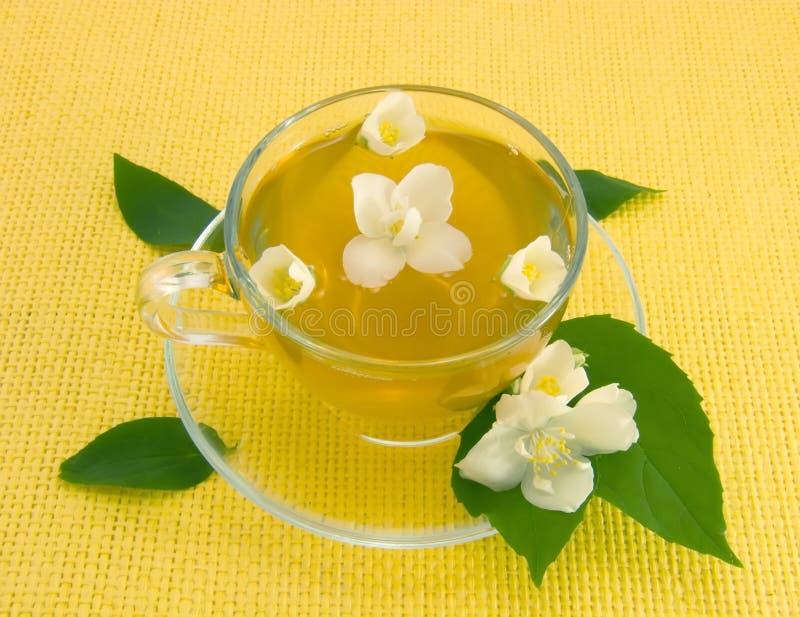 Jasmin tea. Transparent teacup with tea and flower of jasmin royalty free stock photo