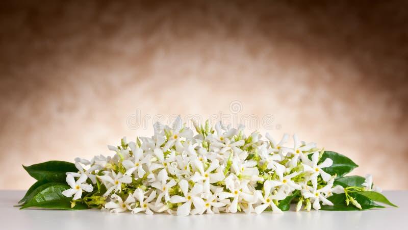 Jasminblommor på vit bordlägger och beige bakgrund royaltyfria bilder