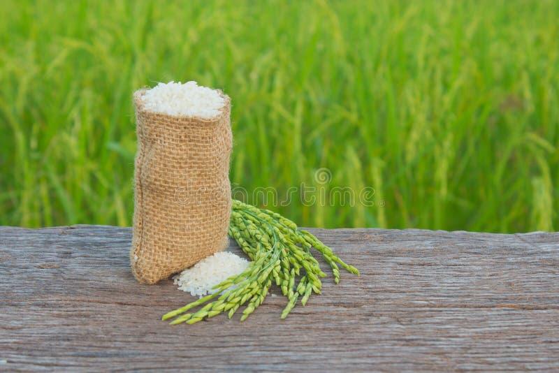 jasmine ρύζι στοκ εικόνα με δικαίωμα ελεύθερης χρήσης