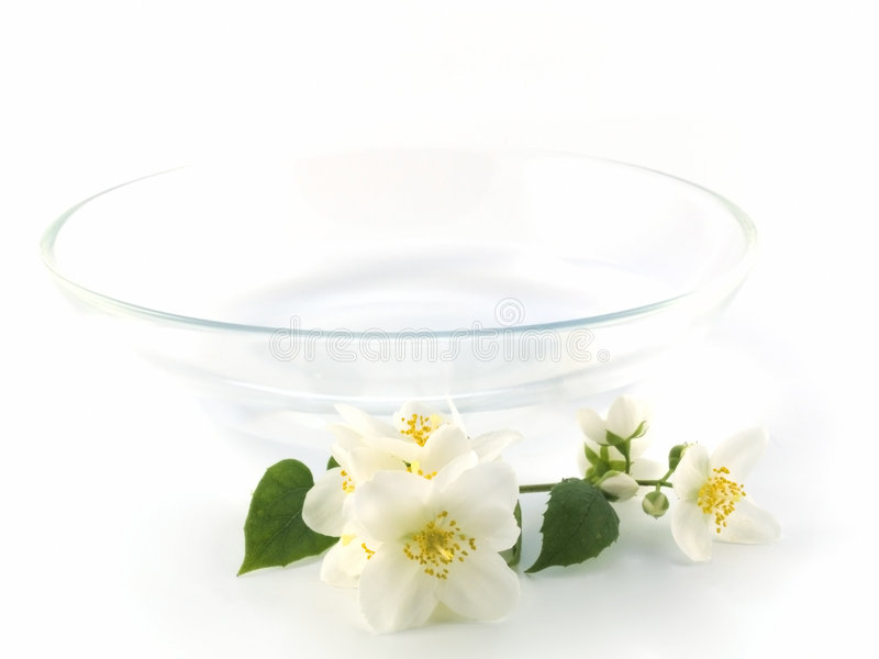 Download Jasmine stock photo. Image of white, floral, bowl, branch - 6975170