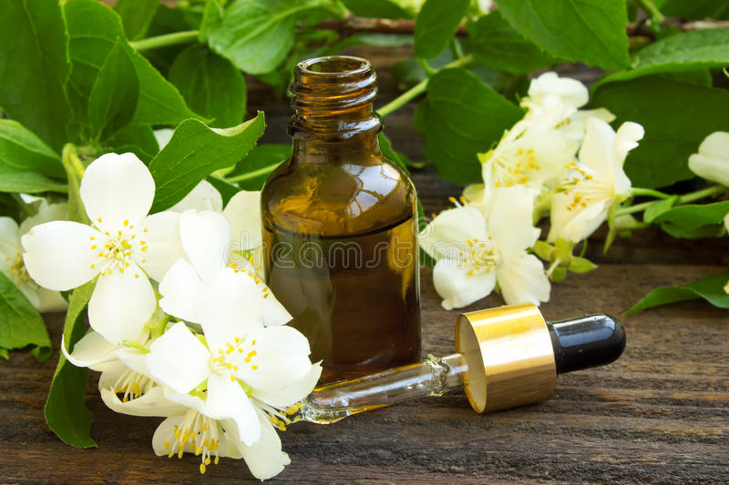 Jasmine Essence royaltyfria foton