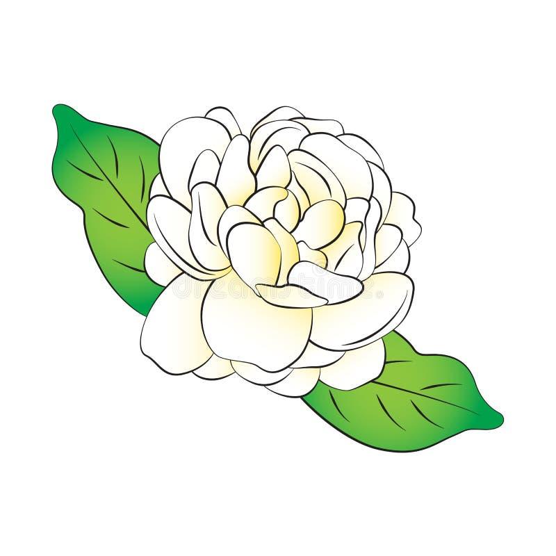 Jasmine Flower stock illustratie