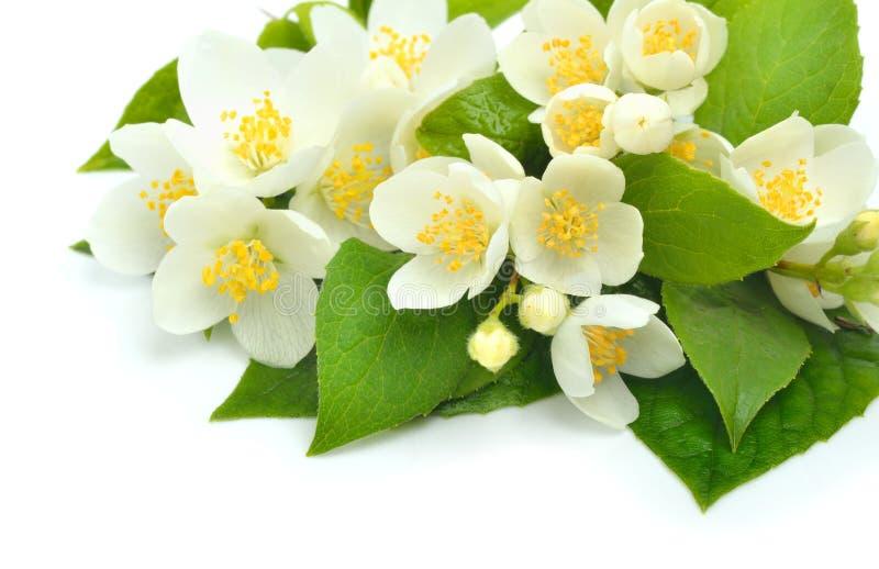 Jasmine Flower Bouquet Isolated On White Stock Photo - Image of ...
