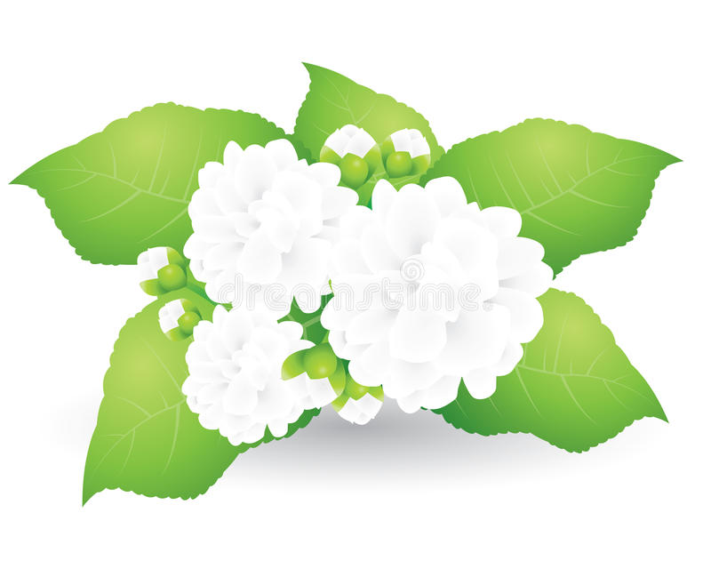 Flower poppy bouquet. stock illustration. Illustration of ...