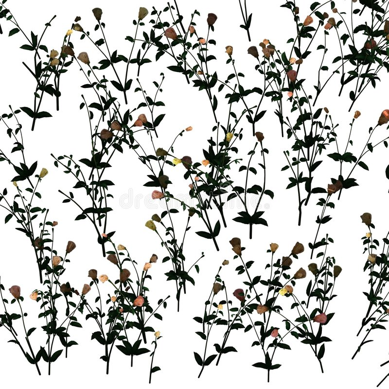 Free Jasmine Pattern Stock Photo - 4771550