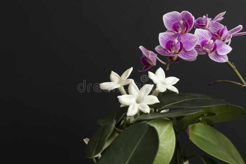 Jasmine and purple orchid with leafs on black background royalty free stock images