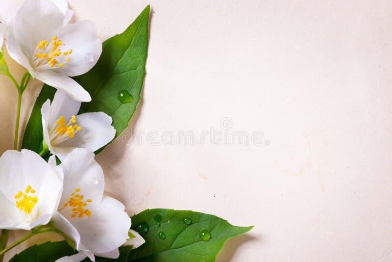Jasminfrühlingsblumen auf altem Papierhintergrund lizenzfreie stockfotografie
