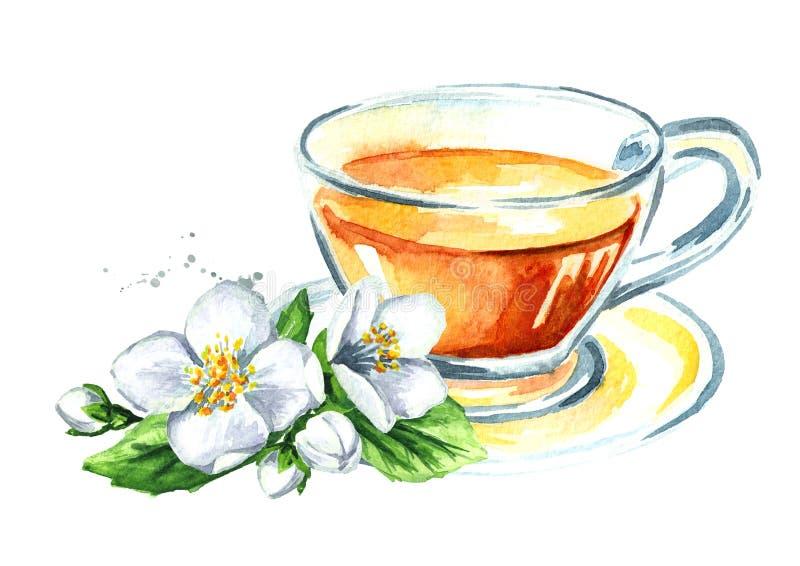 jasminte och jasminblommor Dragen illustration för vattenfärg som hand isoleras på vit bakgrund stock illustrationer
