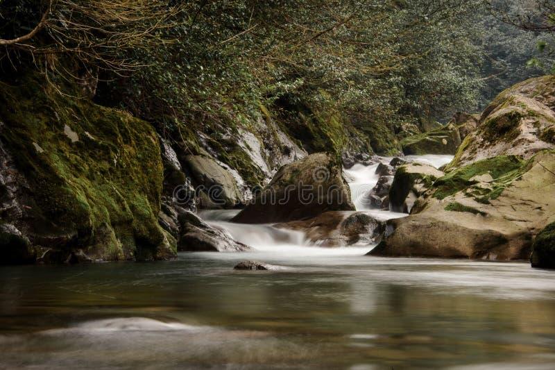 Jasna woda dzika moutain rzeka spada od mech zakrywających kamieni obraz royalty free