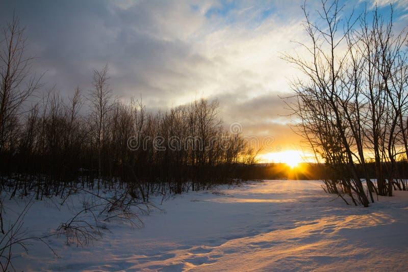 jasne futerkowy na czerwony słońca zachód słońca na zimę drzewa zdjęcie stock