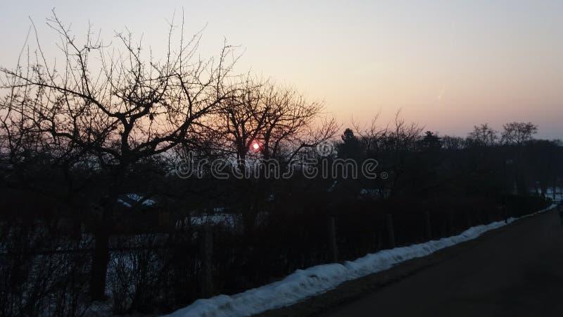 jasne futerkowy na czerwony słońca zachód słońca na zimę drzewa fotografia stock
