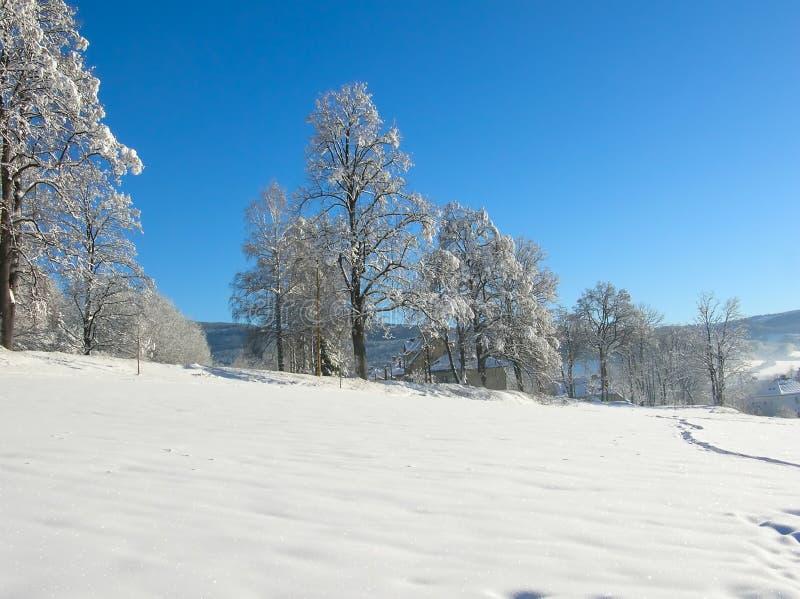 jasne futerkowy na czerwony słońca zachód słońca na zimę drzewa w góry Zamarznięci śnieżni drzewa i niebieskie niebo panorama zdjęcia royalty free