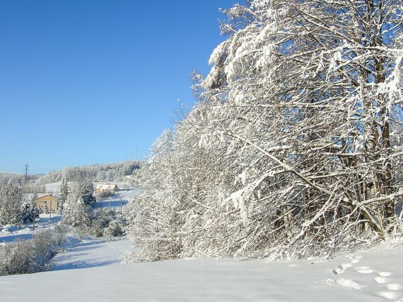jasne futerkowy na czerwony słońca zachód słońca na zimę drzewa w góry Zamarznięci śnieżni drzewa i niebieskie niebo panorama zdjęcia stock