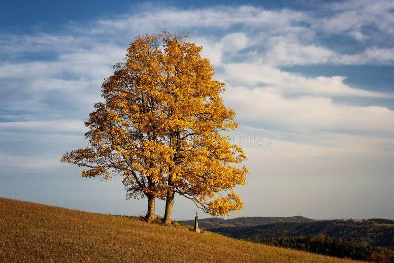 Jasnokolorowe drzewo upadkowe z jasnoniebieskim niebem zdjęcia stock