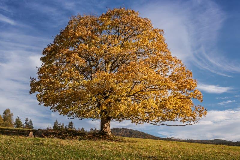 Jasnokolorowe drzewo upadkowe z jasnoniebieskim niebem fotografia royalty free
