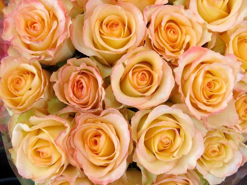 Jasnoróżowe róże o strukturze kwiatowej fotografia royalty free