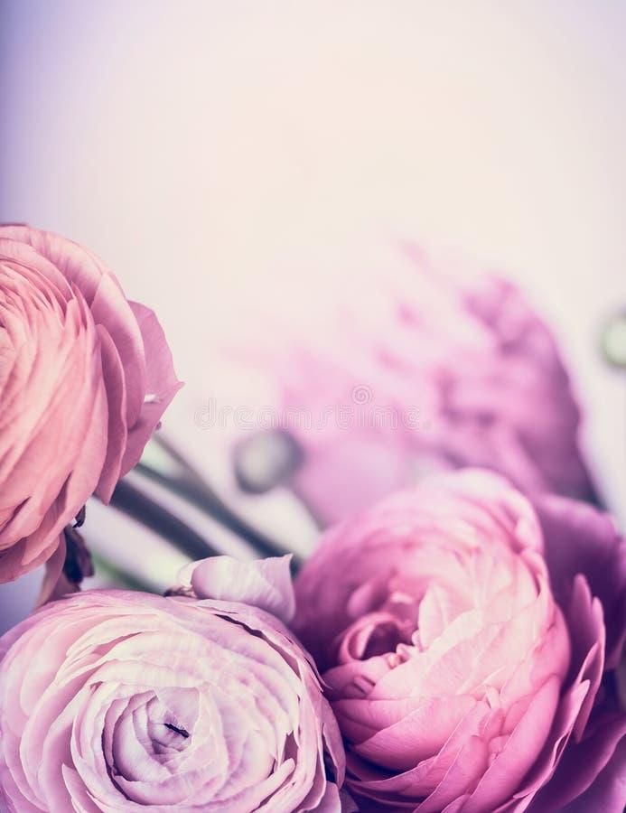 Jasnoróżowi kwiaty na pastelowym tle, zamykają up Kwiecista granica i kartka z pozdrowieniami obrazy royalty free
