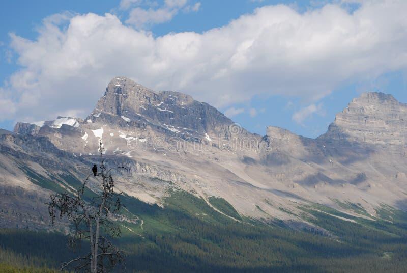 Jaspe, Candian Montanhas Rochosas foto de stock royalty free