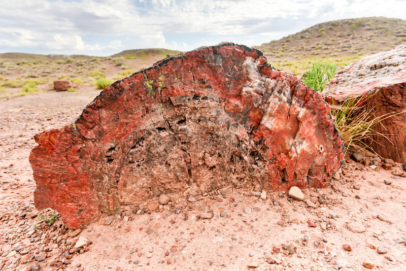 Jasper Forest - Petrified Forest National Park. The Jasper Forest in the Petrified Forest National Park in Arizona stock photos