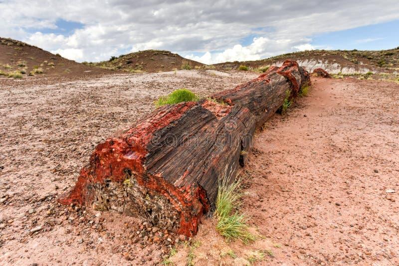 Jasper Forest - versteinerter Forest National Park lizenzfreie stockfotografie