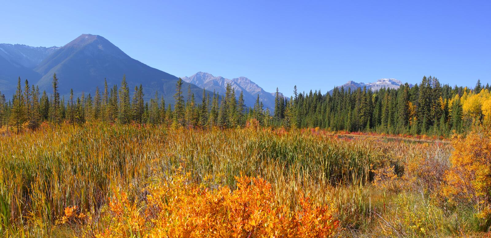 Jasper national park in autumn time royalty free stock images
