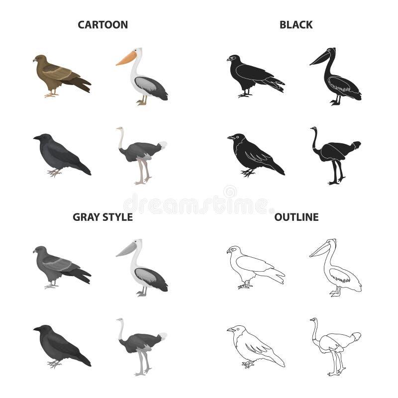 Jastrząb, ptak zdobycz, pelikan, szara wrona, emu struś Ptak ustalone inkasowe ikony w kreskówce czernią monochrom royalty ilustracja