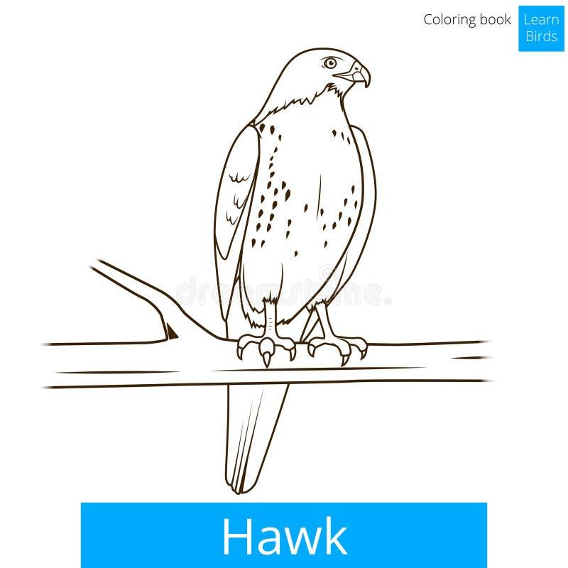 Jastrzębia ptak uczy się ptak kolorystyki książki wektor ilustracji