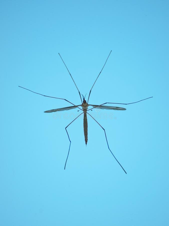 Download Jastrzębia komar zdjęcie stock. Obraz złożonej z komary - 19477776